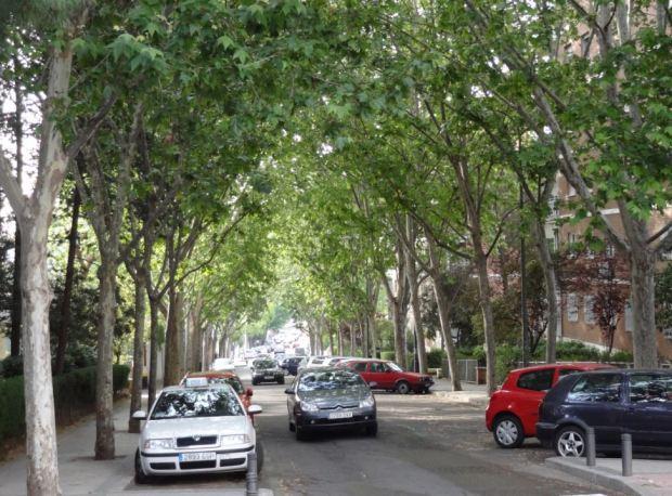 Rue Conde de Cartagena,  a Madrid. Des platanes, mais aussi une belle cannopée. Moins de pierre dans les surfaces